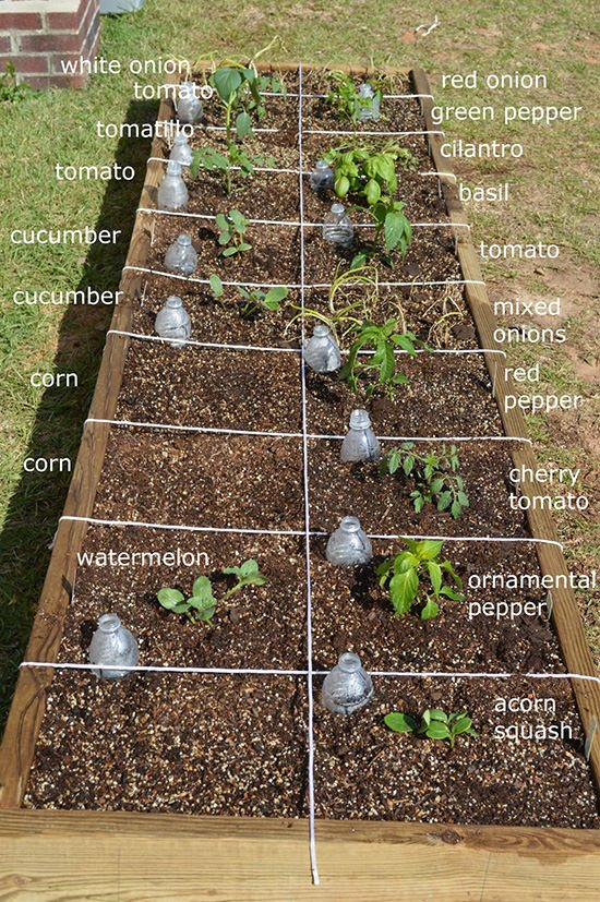 Easy steps to square foot garden success the garden glove for Square foot garden designs