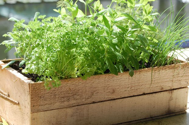 10 herbs you can grow in containers the garden glove. Black Bedroom Furniture Sets. Home Design Ideas