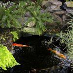 Garden Pond Basics