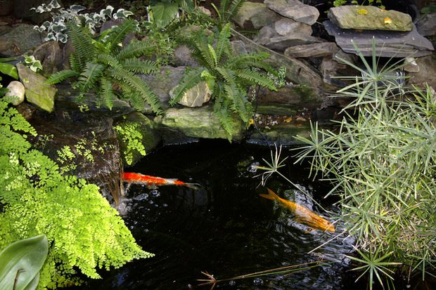 Garden pond basics the garden glove for Natural garden pond