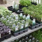 Growing Herbs In Your Garden