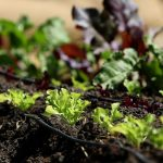 Organic Gardening Advantages