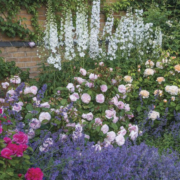 Cottage Garden Plants For American Gardens