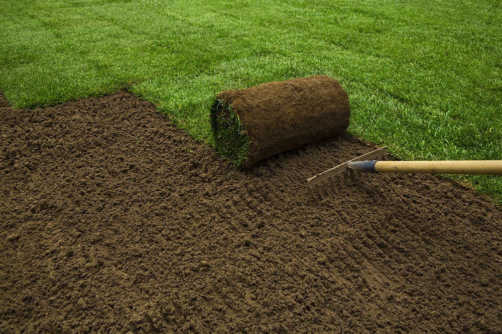 How To Plant A New Lawn From Seed Or Sod The Garden Glove