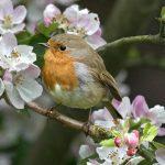 Bird Watching and Gardening