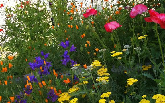 Meer dan 1000 afbeeldingen over cottage gardens op for Cottage garden plants