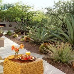 desert backyard southwestern garden