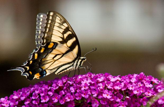 enticing butterflies garden