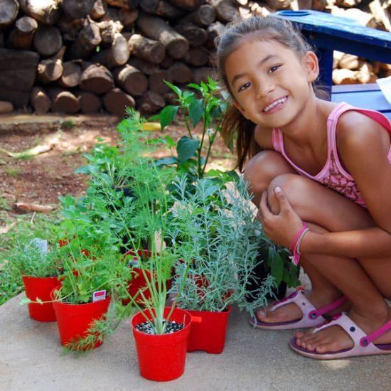 herb garden kids
