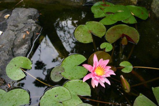 water garden tips