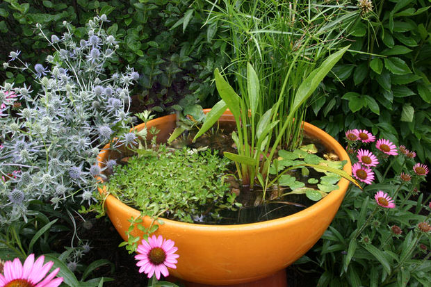 How to make a container water garden the garden glove for Making a water garden
