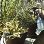 3 Homemade Garden Sprays You Can't Do Without