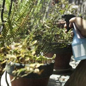 homemade garden spray