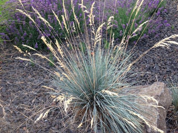 Ornamental grasses update your curb appeal with just one for Ornamental grass border design
