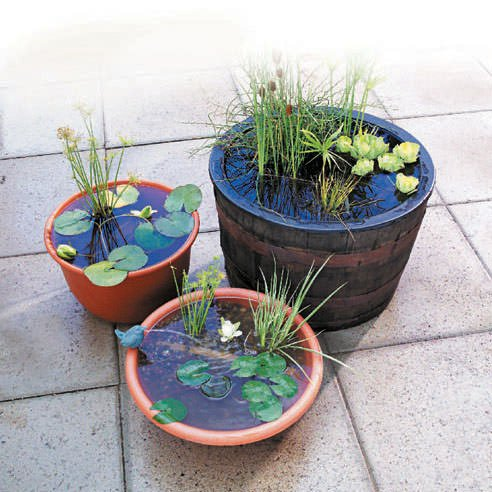 How to make a container water garden the garden glove for Planting pond plants in containers