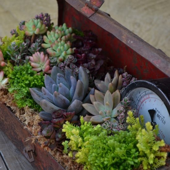 Clever Garden Container Ideas You Never Thought Of!