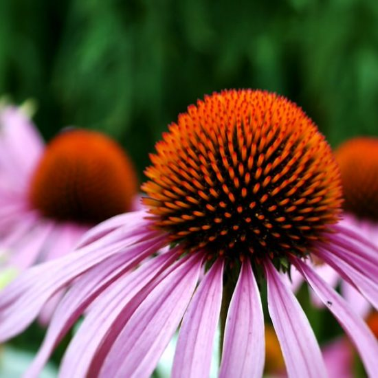 Easy Flowers to Grow for a Stunning Flower Garden