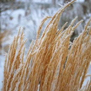 Ornamental Grasses: Update Your Curb Appeal