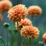 Orange, the New Hot Color: How Do I Use It in the Garden?