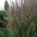 Ornamental Grasses: Update Your Curb Appeal with Just One Plant