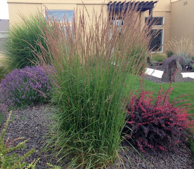 Backyard project access ideas for landscaping with for Ornamental grass landscape ideas