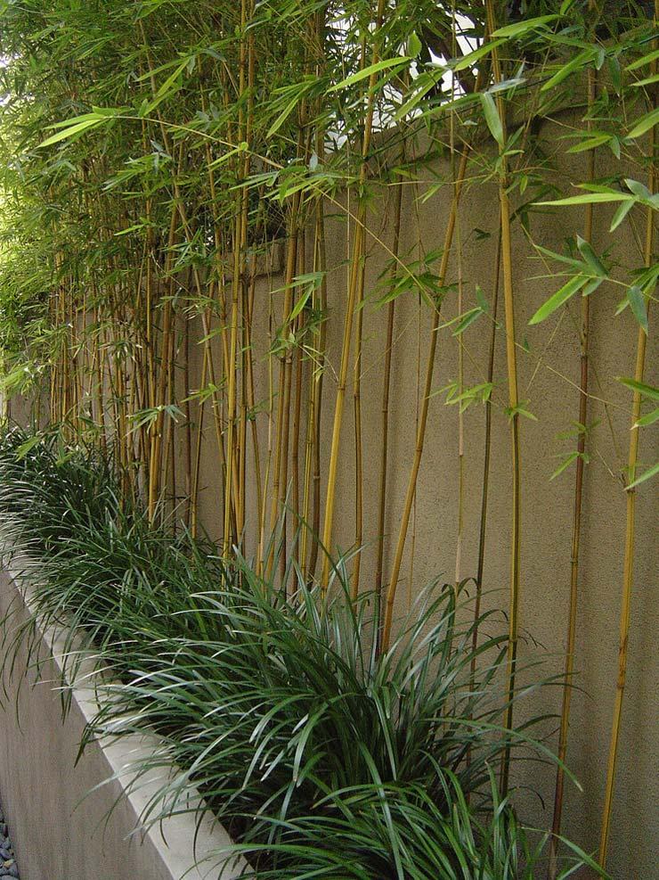 Modernize Your Garden How To Grow Bamboo The Garden Glove