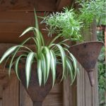 5 Ways to Make a Plant Container into Garden Art