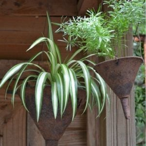 plant container garden art
