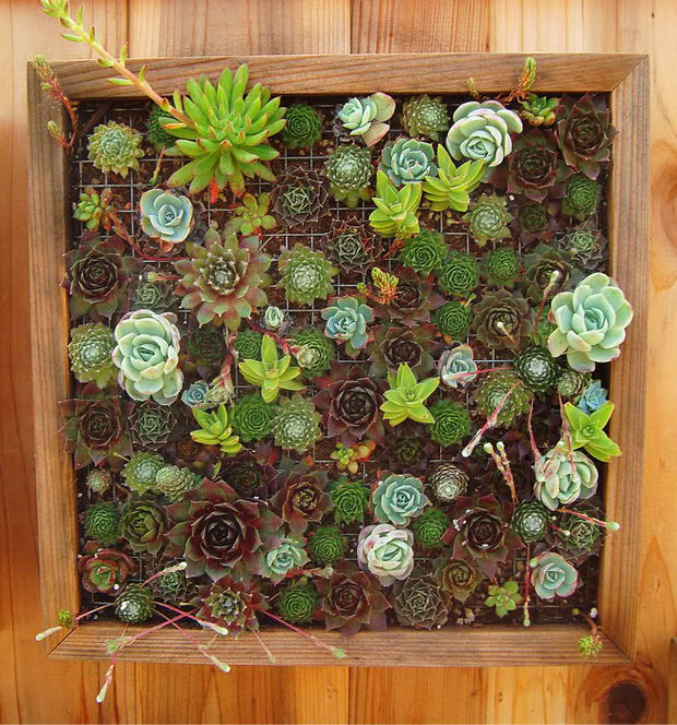 small space vertical garden framed