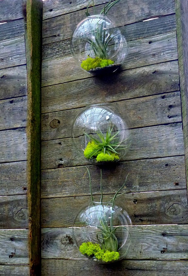 diy terrariums easy the garden glove. Black Bedroom Furniture Sets. Home Design Ideas