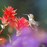 Make Your Garden a Hummingbird Haven