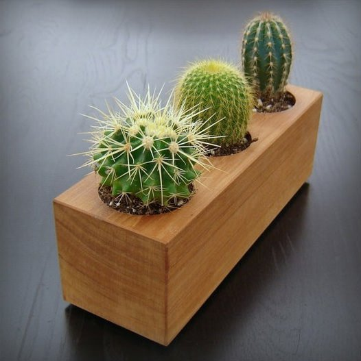 Modern Trends Cactus Garden Ideas Tips The Garden Glove