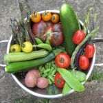 Got Veggies? Harvesting Your Vegetable Garden for Flavor!
