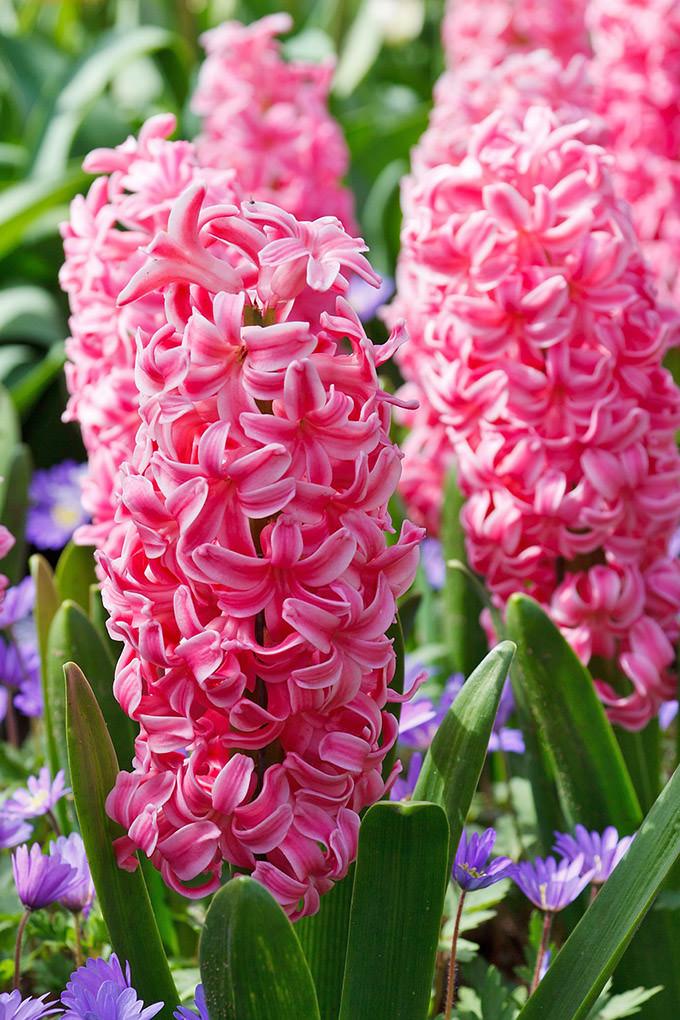 Bulb Crazy - Plan A Spring Bulb Garden Now