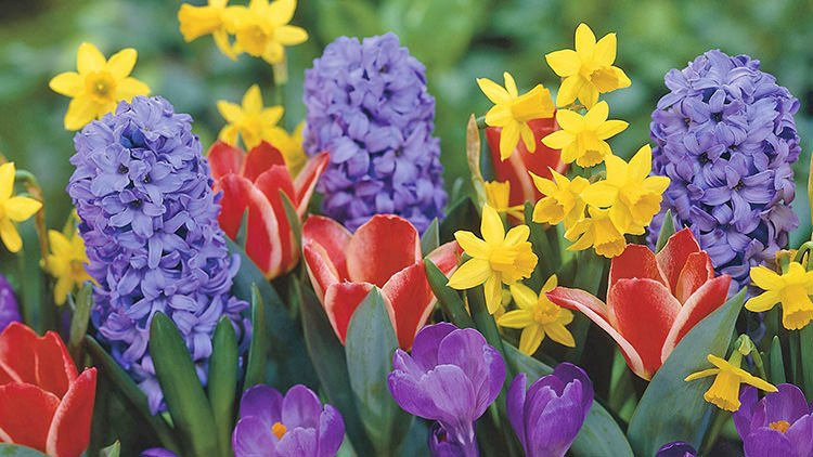 Bulb Crazy - Plan A Spring Bulb Garden Now