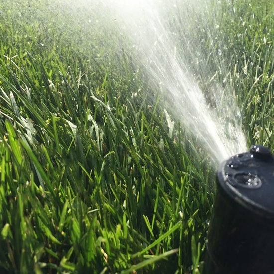 Fall Lawn Care Tricks for a Killer Lawn in Spring!