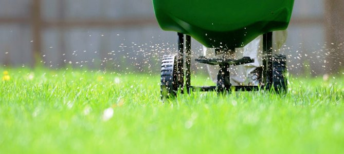 Fall Lawn Tricks for a Killer Lawn in Spring