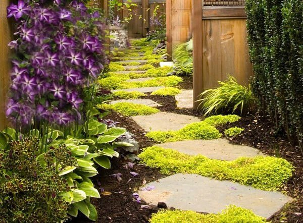 Irish Moss Softens The Stepping Stones But Succulents And Drought Resistant Ground Covers Add Interest Texture To