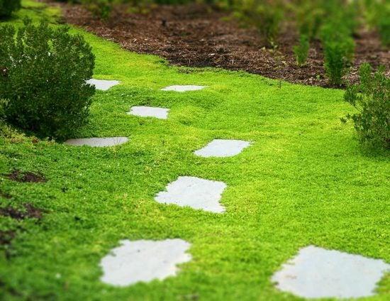 Gardening Tips & Ideas | The Garden Glove