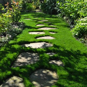 pathways walkways