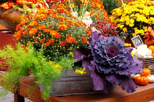 Fall Planter Wow in 3 Easy Steps