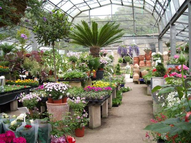 How to Buy Plants on Clearance (And which ones!) | The ...