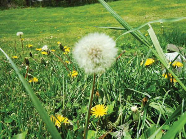 Fall lawn weed control