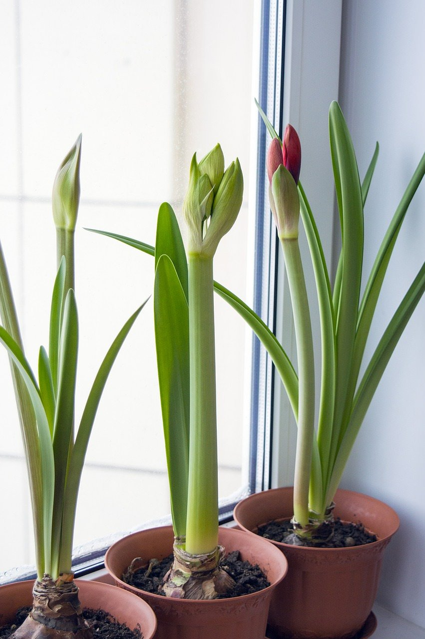 Holiday Garden Gifts Decor How To Force Bulbs Indoors