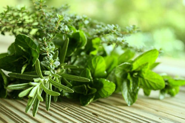 How To Harvest and Preserve Herbs-Growing herbs