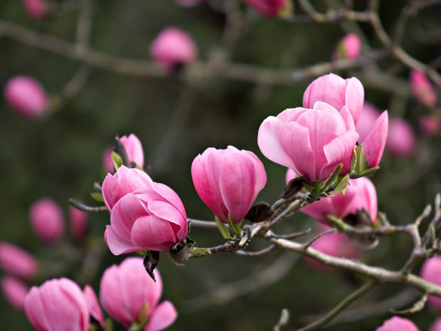 The Top Trees for Small Gardens
