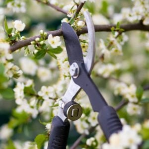 How To Prune Trees & When To Prune Trees