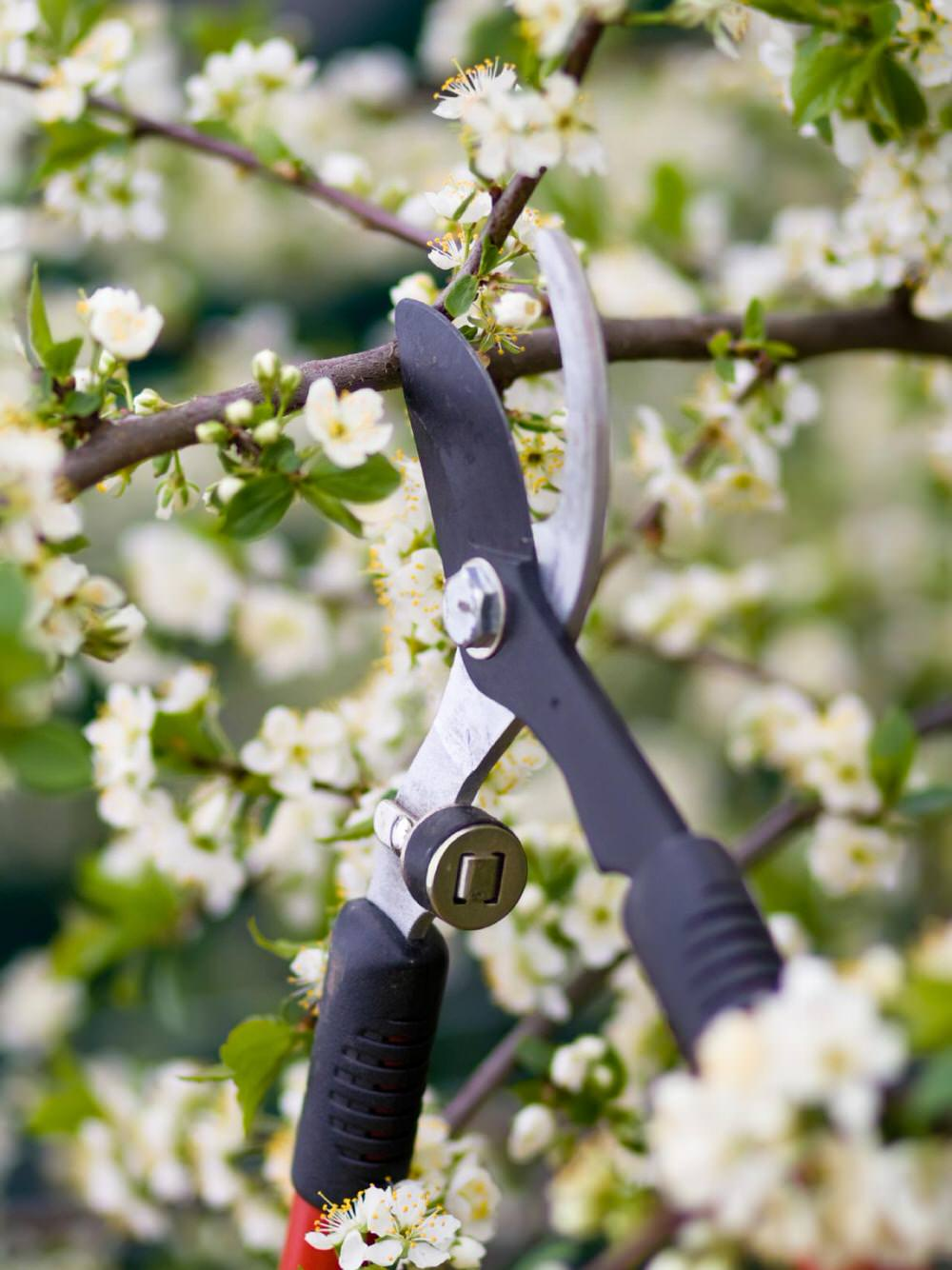How To Prune Trees • When To Prune Trees