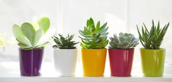 The Best Easy Houseplants Any Brown Thumb Can Grow