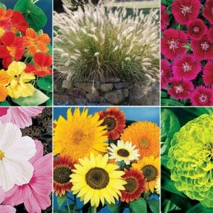 Best Plants to Start from Seed